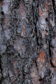 Closeup detail of the old tree trunk