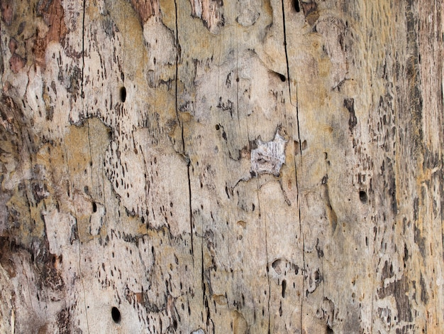 Closeup detail of textured bark old wooden cracked