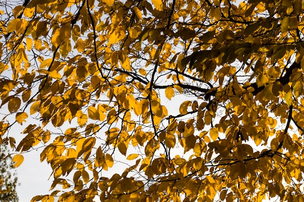 Closeup and details of foliage with autumn yellow colors, real nature