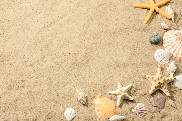 Closeup of different seashells on a sandy beach, a surface with space for text