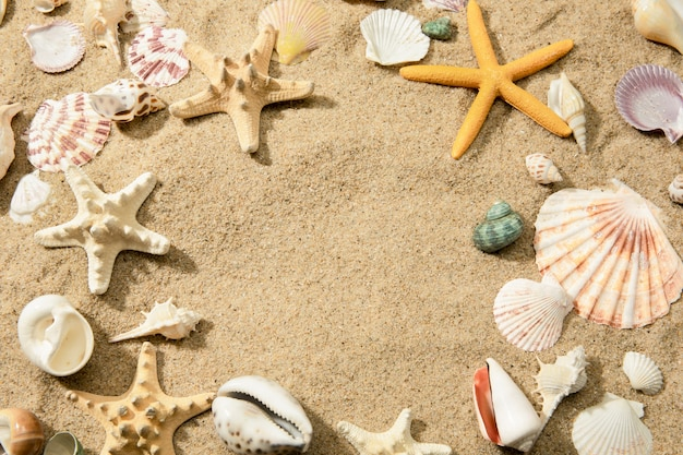 Closeup of different seashells on a sandy beach, a wall with space for text
