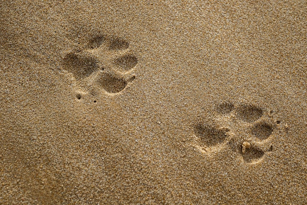 Closeup of dog paw print in sand on the beach of rota