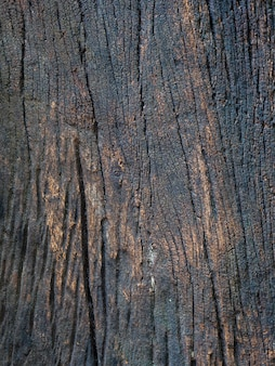 Closeup dried texture of dark brown bark.