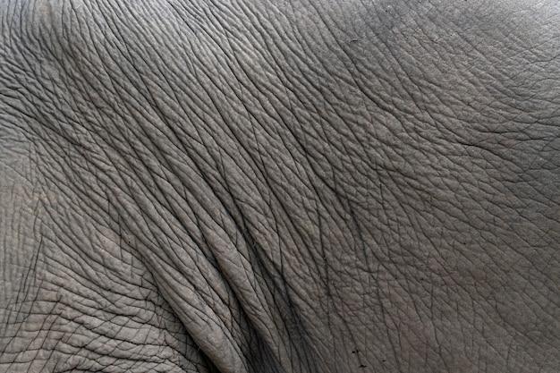 Кожа слона крупного плана. текстура и фон