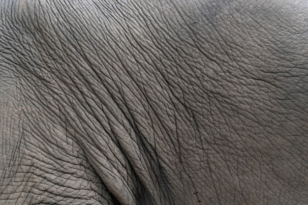 Closeup elephant skin. texture and background