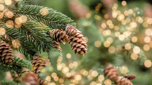 Closeup of evergreen branch with pinecones as nature background,