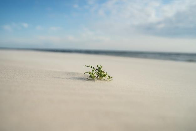 Closeup of an evergreen leaf on the sand under sunlight
