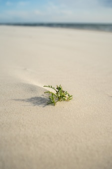 Closeup of an evergreen leaf on the sand under sunlight
