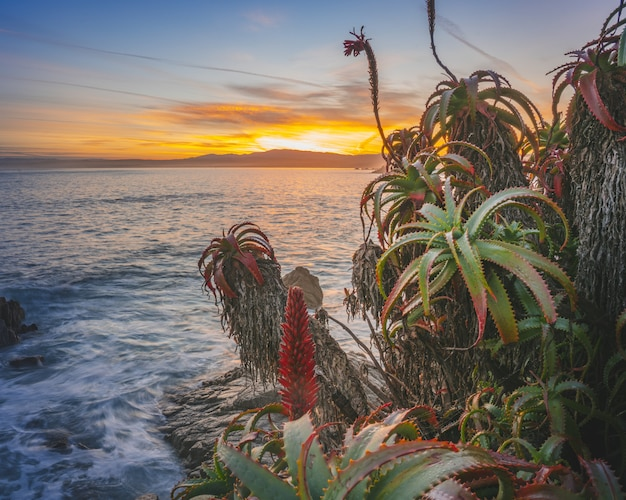 Closeup of exotic tropical plants in the foreground and a sea during sunset in the distance