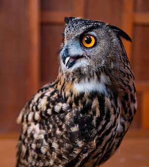 Closeup face owl, nature animal