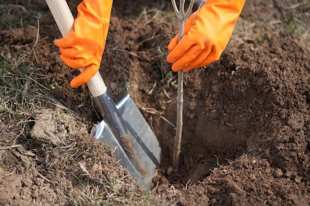 Closeup of farmer planting tree