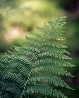 Closeup of fern leaves under the sunlight with a blurry background