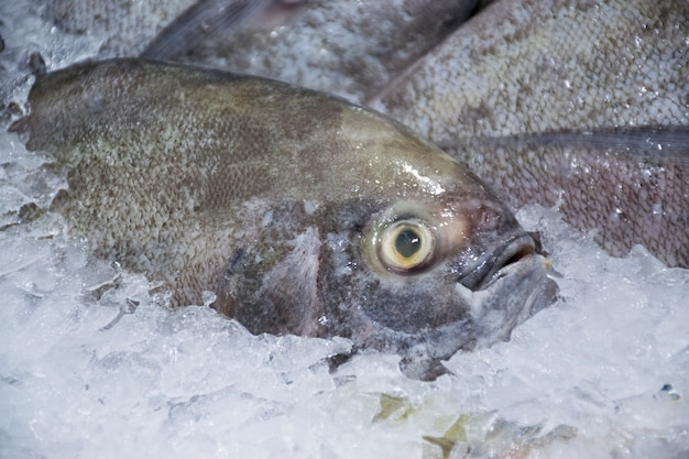 Closeup of fresh black pomfret fish market on ice