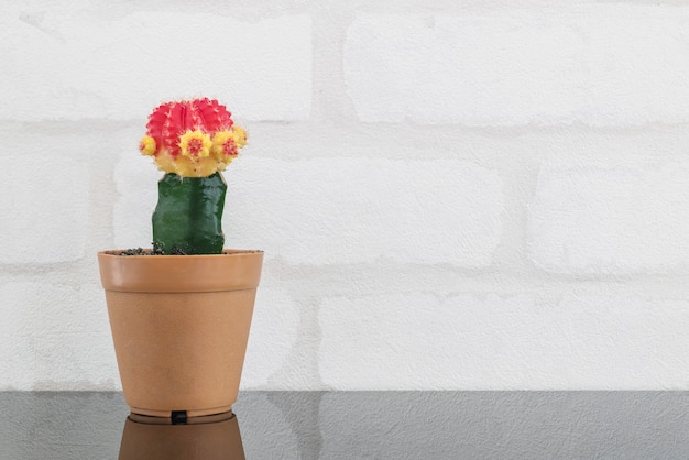 Closeup fresh color cactus in brown plastic pot for decorate on black glass table and white brick wall textured background with copy space