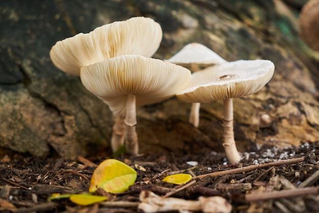 Closeup fresh fungus nature summer