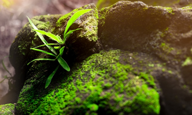 熱帯雨林の緑のコケが付いている石のクローズアップ新鮮な緑の草。石の床のコケ。雨上がりのジャングルの中で緑の草。きれいな環境。森の生態。自然の美しさ。