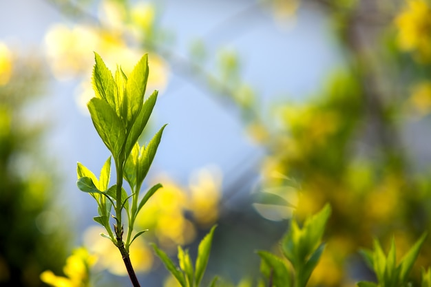 Closeup of fresh tree sprouts with green leaves in spring.