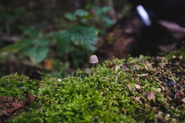 Primo piano di funghi che crescono sui muschi su legno sotto la luce del sole