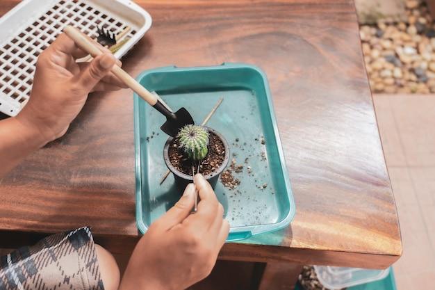 ファーム内のサボテンのポットに取り組んでいる庭師の手のクローズアップ