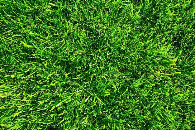 Closeup grass field background green grass green background texture lawn