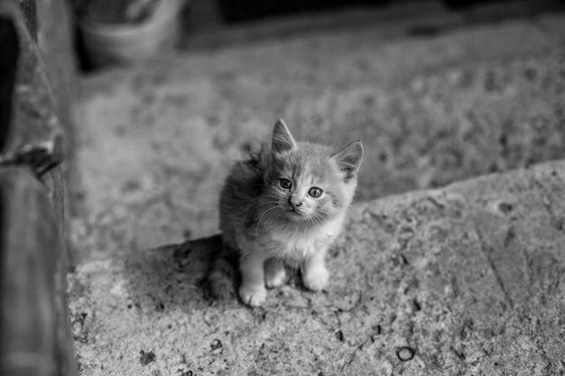 階段に座っている愛らしいふわふわの子猫のクローズアップグレースケール