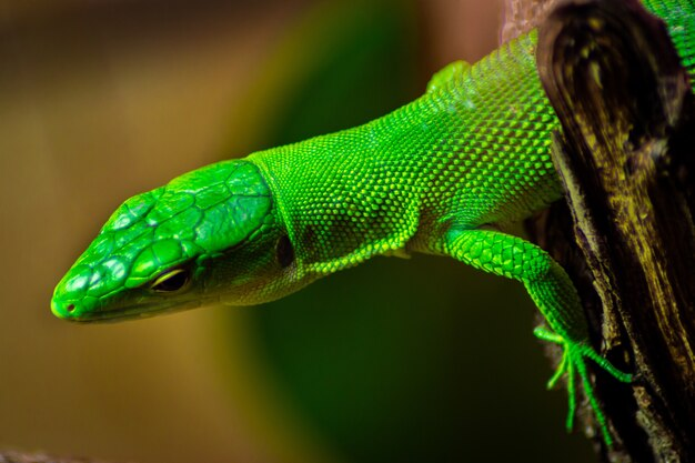 Closeup of a green anole on a tree under the sunlight