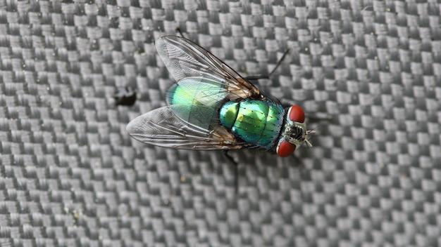 Primo piano di una bottiglia verde che vola sotto le luci con uno sfondo sfocato