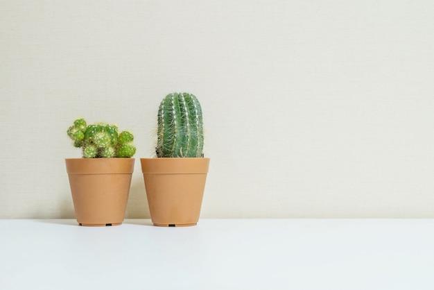 Closeup green cactus on desk
