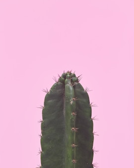 Closeup green cactus on pastel pink background