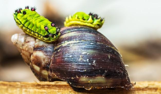 Closeup of green caterpillars on a snail