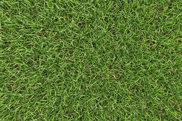 Closeup green grass texture background