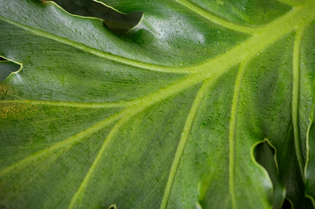 Closeup of a green leaf background