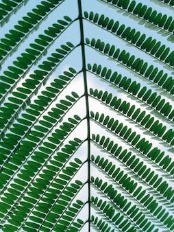 Primo piano di un ramo di foglia verde