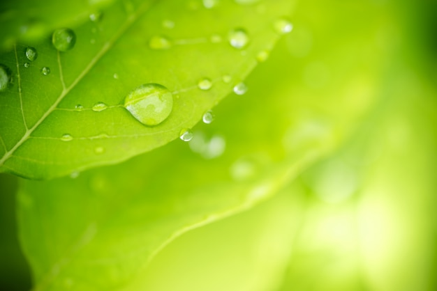 クローズアップ緑の葉の質感と液滴、背景や壁紙で使用します。自然のコンセプト