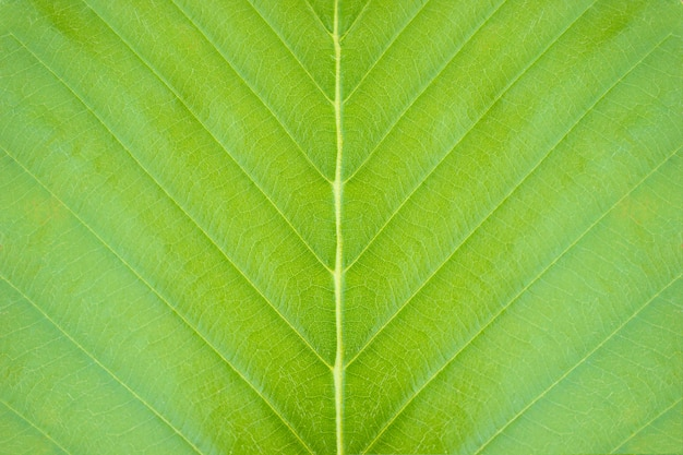 熱帯林のクローズアップの緑の葉のテクスチャ背景。自然保護と地球温暖化の概念。