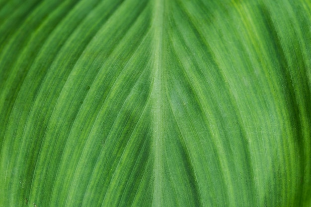 Closeup of green leaf textured background