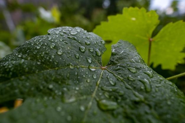 Primo piano di una foglia verde con gocce di pioggia