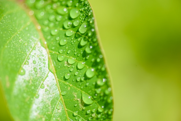 Closeup green leave with water drop.