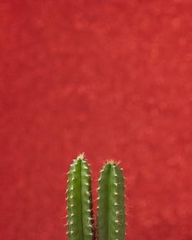 赤い色の背景にクローズアップ緑の小さなサボテン植物