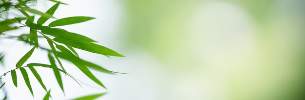 Closeup of green nature bamboo leaf on blurred greenery surface in garden with bokeh and copy space