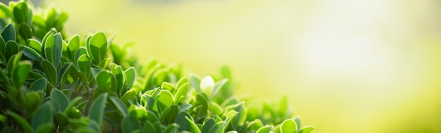 Closeup of green nature leaf on blurred greenery surface in garden with bokeh and copy space