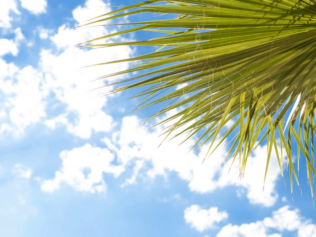 Closeup on green palm leaves border isolated on sky, fresh exotic tree foliage, paradise beach, summer vacation and holiday concept