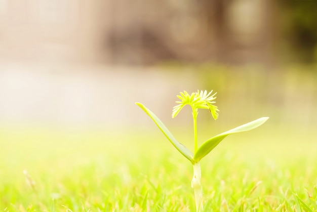 Closeup green sapling on grass floor background with copy space and sun light