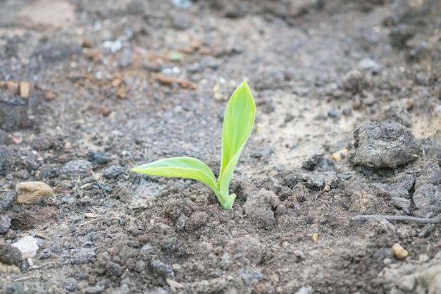 Closeup green sapling on soil background