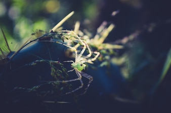 Closeup green transparent spider