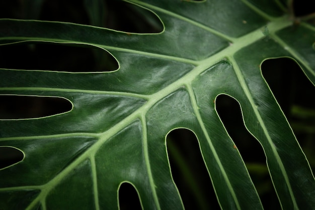 Closeup green tropical leaf