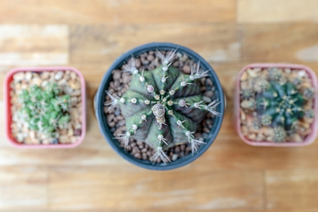 Closeup group of cactus in a plastic pot