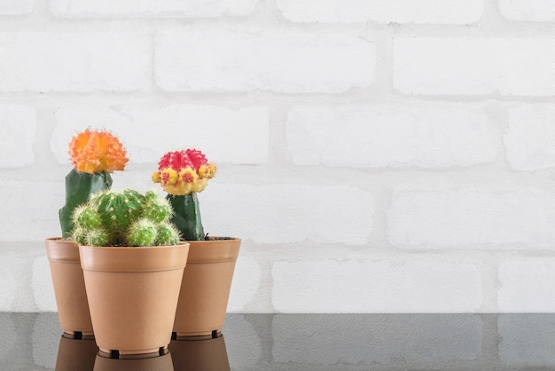 Closeup group of fresh green cactus in plastic pot for decorate on black glass table