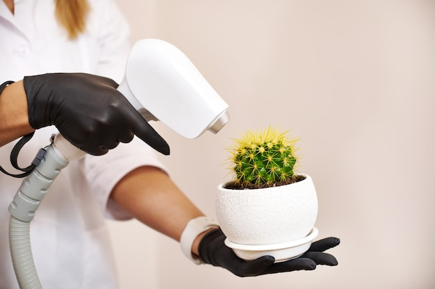Closeup of hands of a beautician specialist aiming a laser device on the cactus needles