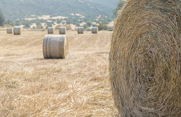 Closeup of a hay stack and a field of dry grass with hay bales in a distance. soft focus, copy space